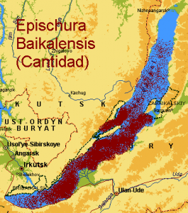 Indicencia del Cangrejo Epishura